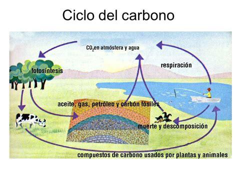 Ciclos biogeoquímicos y Fotosíntesis - ppt video online ...
