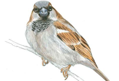 Cien aves al lado de casa y no las ves | Ciencia | EL PAÍS