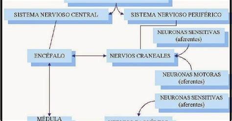 CIENCIAS BIOLOGICAS: SISTEMA NERVIOSO