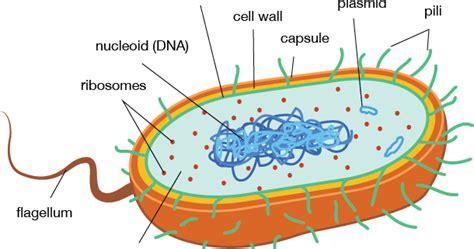Ciencias de Joseleg: Introducción a las partes de la ...