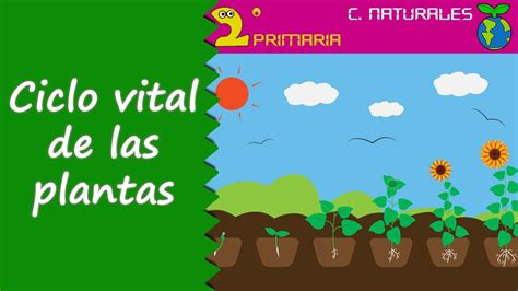 Ciencias de la Naturaleza. 2º Primaria. Tema 5. El ciclo ...