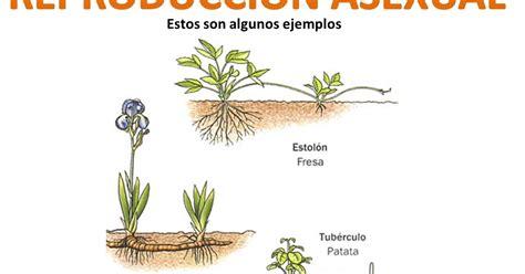 CIENCIAS NATURALES: LA REPRODUCCIÓN EN LAS PLANTAS
