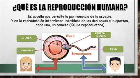 Ciencias naturales la reproducción humana