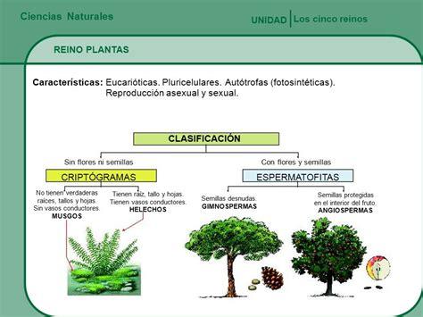 Ciencias Naturales Los cinco reinos UNIDAD REINO PLANTAS ...