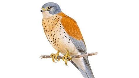 Cinco cosas que debes saber de las aves migratorias