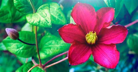 Cinco plantas trepadoras con flor para el jardín | Blog ...