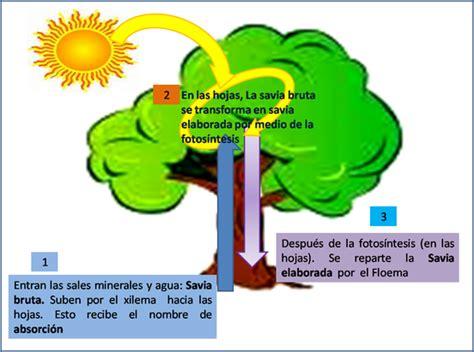 circulación en Plantas. :: CIENCIAS NATURALES SEPTIMO