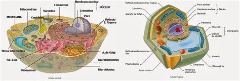 Citología vegetal   Apuntes de Fisiología Vegetal