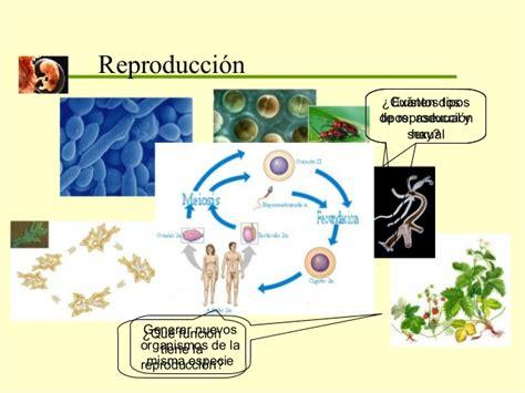 Clase gametogenesis