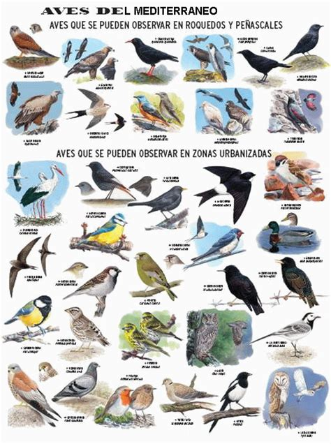 Clases De Aves Images - Reverse Search