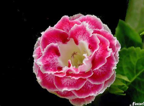 Clases de flores con sus nombres   Imagui