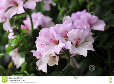Clases De Flores. Nomes Das Flores Usadas Em Casamentos ...