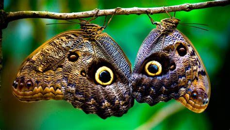 Clases de mariposas :: Imágenes y fotos