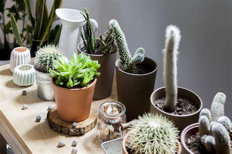 Clases De Plantas De Interior. Full Size Of De Plantas De ...