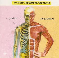 claseslocas - APARATO LOCOMOTOR