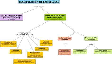 Clasificacion celular