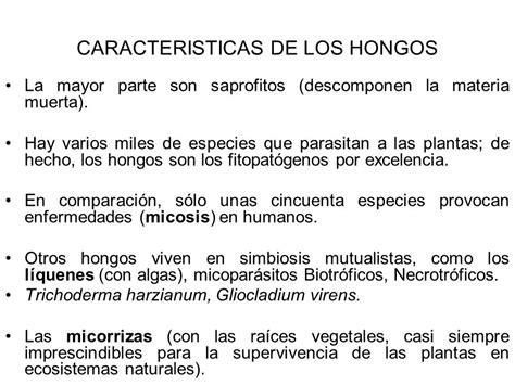 CLASIFICACIÓN DE HONGOS   ppt video online descargar