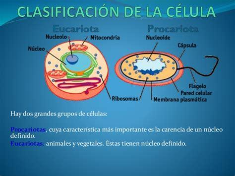 Clasificacion de la celula