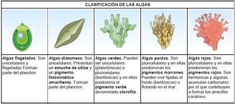 Clasificación de las algas | Cienciasafa