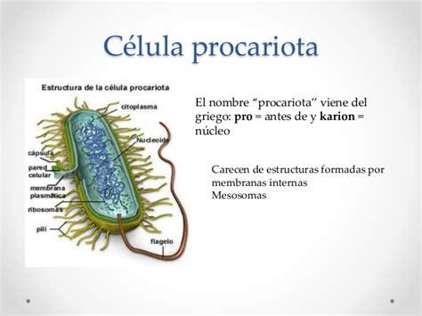 Clasificación de las células   LA CÉLULA