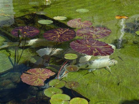 Claves para el mantenimiento de estanques en primavera  I
