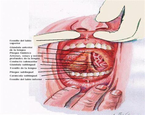 Clinica del Adulto: Piso de Boca