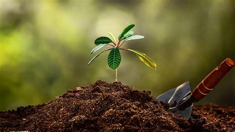 Club de Jardinería - Tierra o humus, el suelo para tu jardín