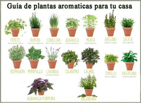 Cocina en primavera con hiervas aromáticas - ElTiempo.es