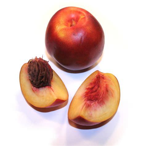 Cocinando Con Todos Los Sentidos: Nectarina (Prunus persica)