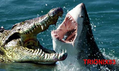 COCODRILO VS TIBURON. Las Mejores batallas de animales ...
