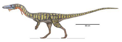 Coelophysis - Wikipedia, la enciclopedia libre