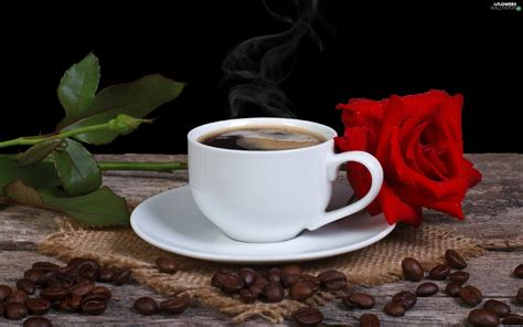 coffee, rose, Bench, composition, grains, cup - Flowers ...