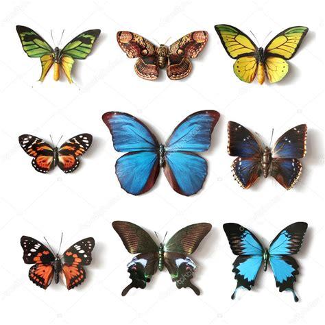 Colección de insectos disecados de la mariposa — Fotos de ...