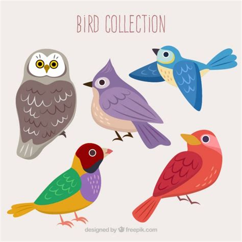 Colección de pájaros de colores   Descargar Vectores Premium