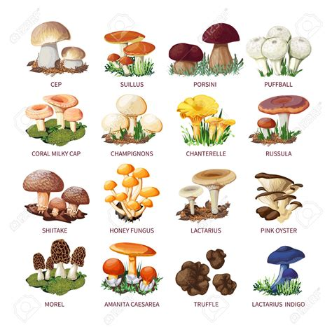 Collecting mushrooms clipart   Clipground