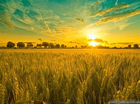 Collection of Summer Landscape Backgrounds, Summer ...