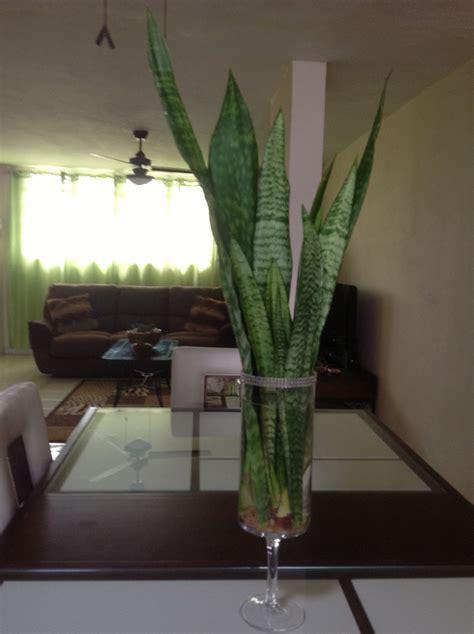 Coloca estas hojas de esta planta en un florero con agua y ...