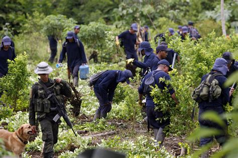 Colombia FARC ceasefire and cocaine production - Business ...