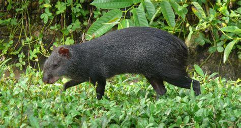 Colombia - Fauna de Colombia
