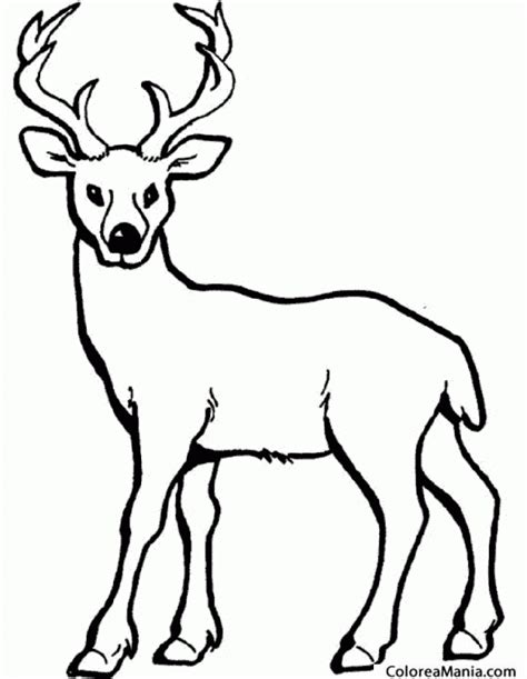 Colorear Alce. ciervo. Deer. Crvol 2  Animales del Bosque ...