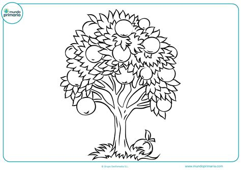 Colorear dibujo árbol infantil   Mundo Primaria