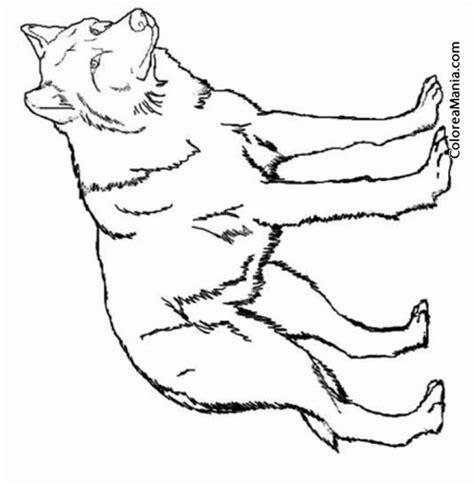 Colorear Lobo alfa. Wolf  Animales del Bosque , dibujo ...