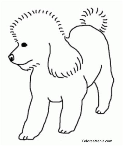 Colorear Silueta Perro Poodle (Animales Domésticos ...