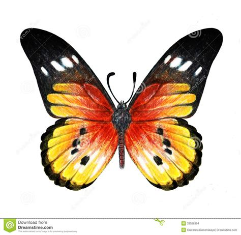 colored pencil butterfly | Stock Images: Hand drawn ...