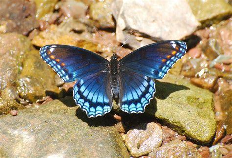 Colores de las mariposas tornasoladas :: Imágenes y fotos
