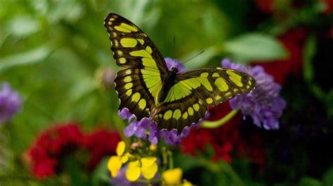 Colores de una mariposa :: Imágenes y fotos