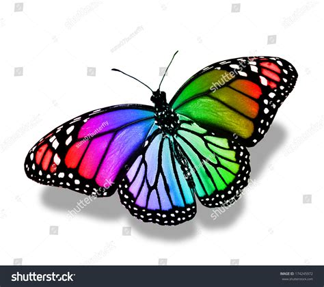 Colorful Butterfly Isolated On White Stock Photo 174245972 ...