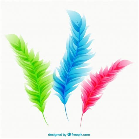 Colorful feathers Vector | Free Download