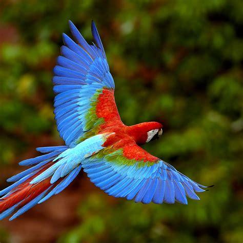Colorful Parrot iPad Wallpaper   ipadflava.com