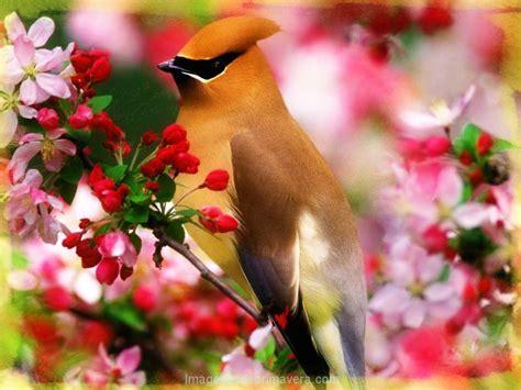Coloridas Fotos de Pàjaros hermosos | Imágenes de Primavera